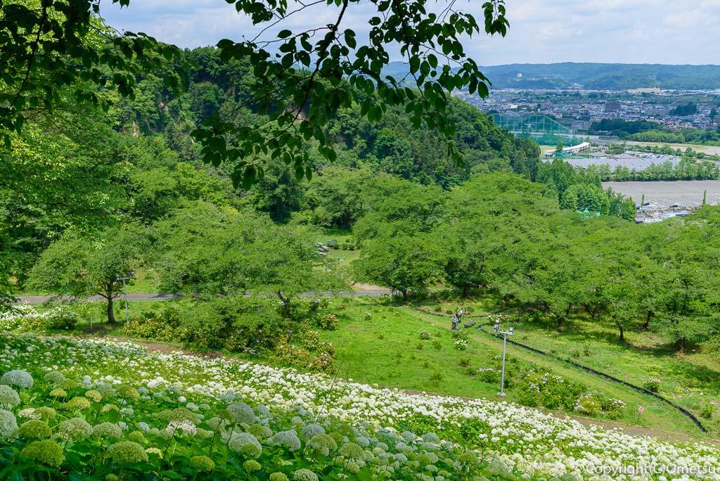 あきる野市「わんダフルネイチャーヴィレッジ」のアジサイ、アナベルの雪山近くの休憩所からの、秋川渓谷の展望