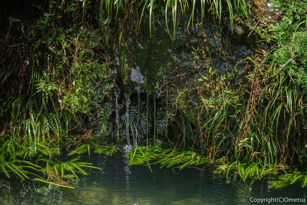 青梅市・常福寺の池の湧き水