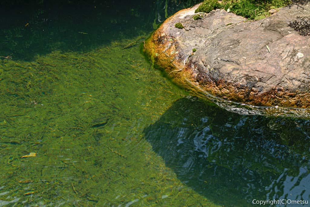 青梅市・常福寺の池