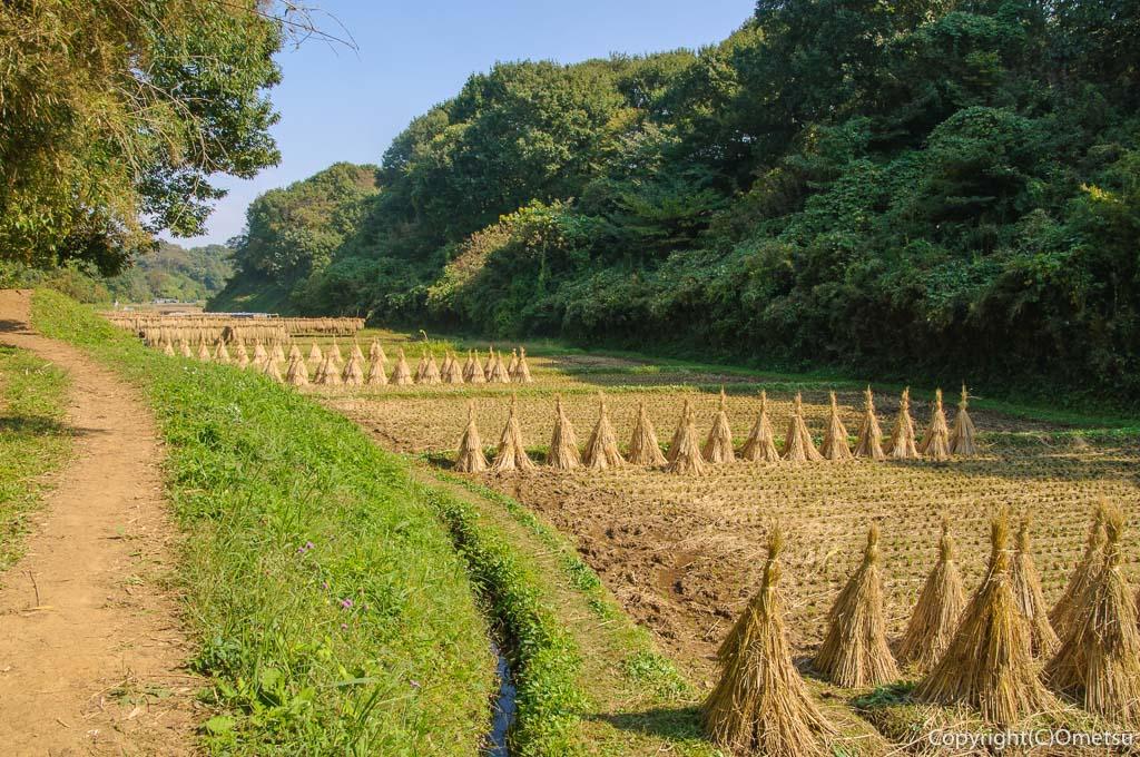 横浜、寺家ふるさと村の谷地