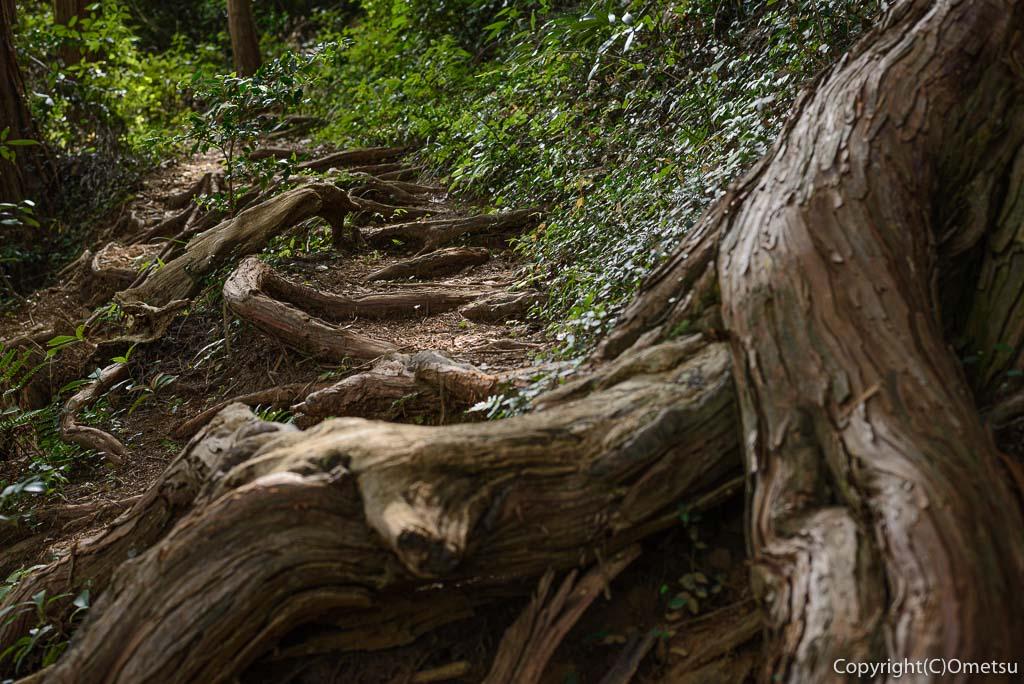 青梅市・即清寺の山内新四国八十八ヵ所・霊場の山道の、木の根