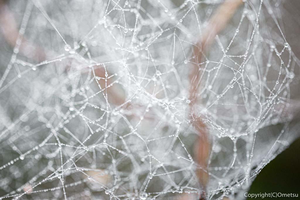 青梅市・御岳山の富士峰園地(レンゲショウマ自生地)の蜘蛛の糸