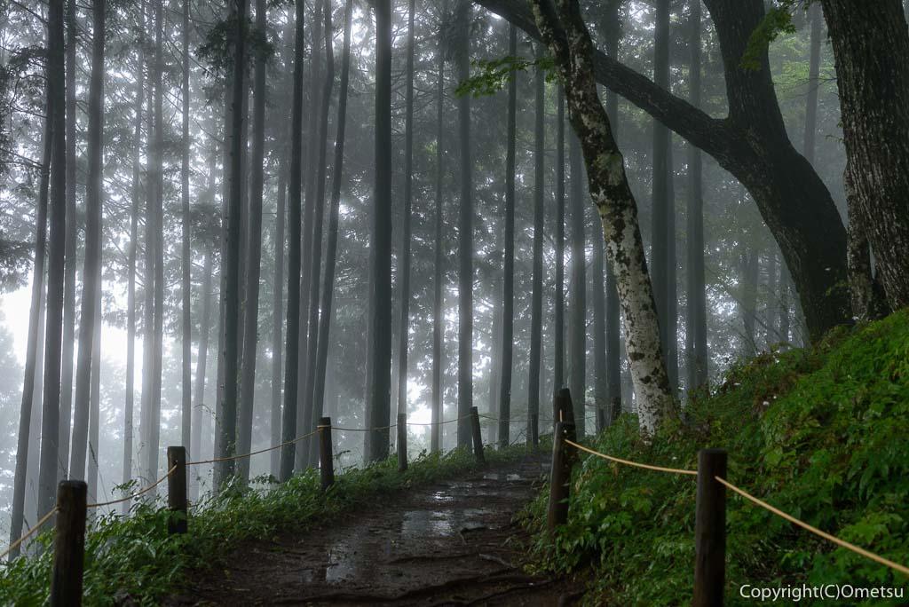 青梅市・御岳山の富士峰園地(レンゲショウマ自生地)の森